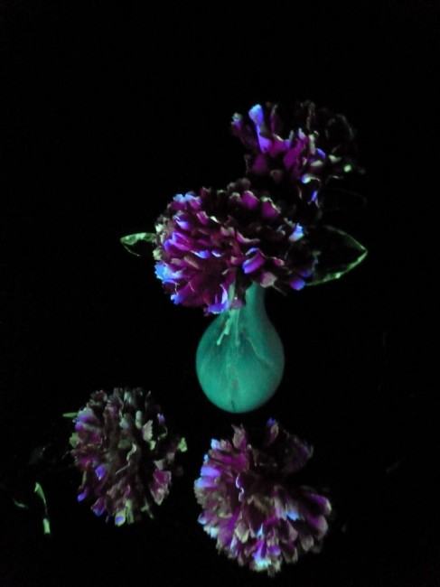 glow in the dark flower 2