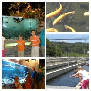 fish hatchery collage