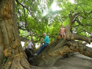Grandparents and kids enjoying the Osage Orange Tree