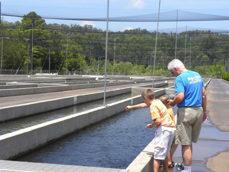 Wolf creek national fish hatchery hobbies on a budget for Virginia fish hatchery