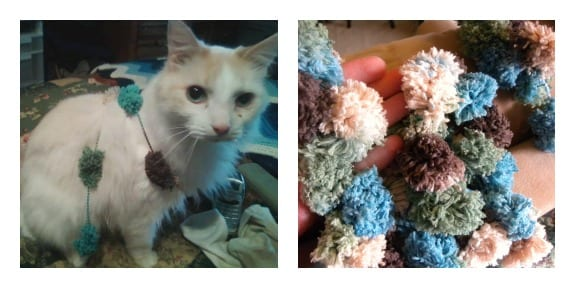Even Casper loves the pompadoodle yarn!