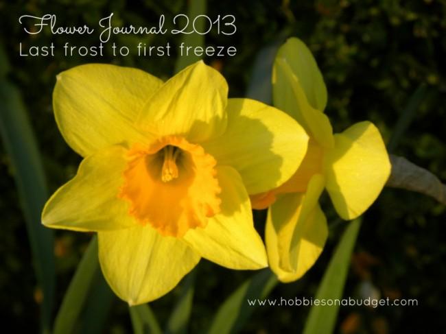 Flower Journal 2013