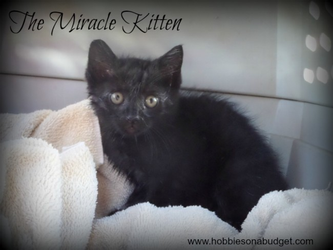 The-Miracle-Kitten
