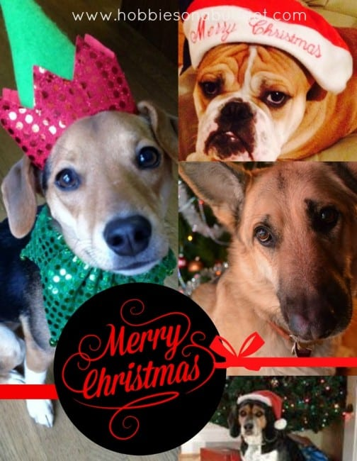 merry-christmas-from-dogs