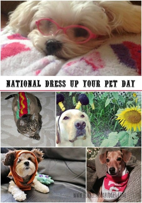 pet-costumes-national-dress-up-your-pet-day