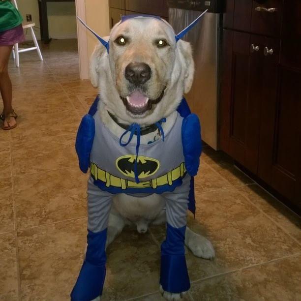 super-heroes-pet-costume