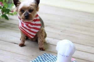 DIY:  Chef Hat for your Dog + Treat Ideas