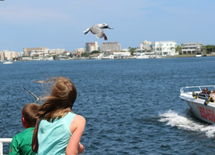 dolphin-cruise-southern-star