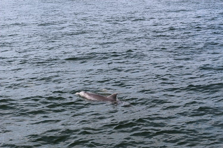 dolphin-cruise-southern-star-destin-florida