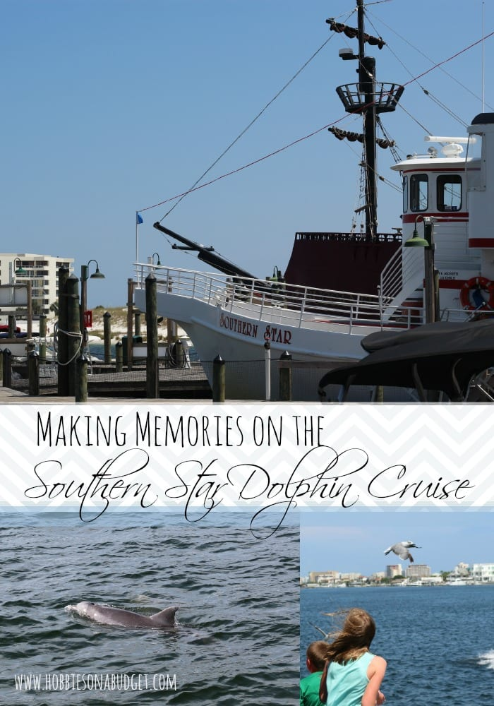 southern-star-dolphin-cruise