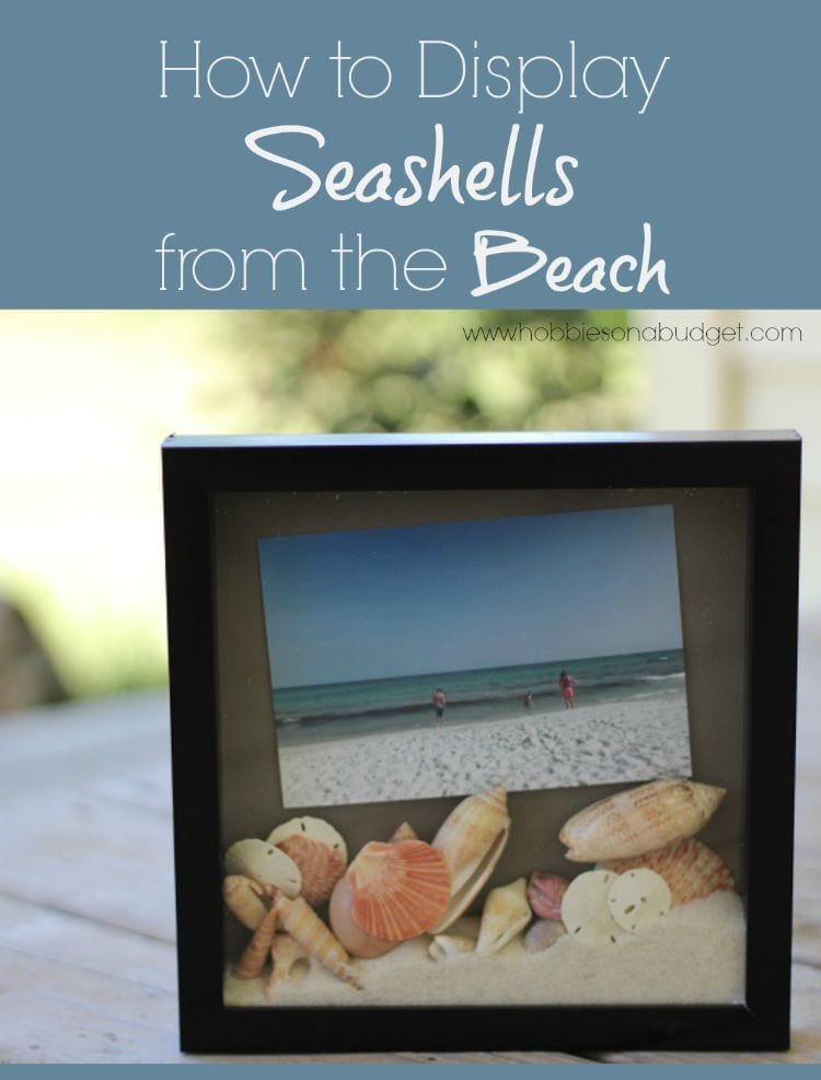 Simple Ideas to Display Seashell Memories