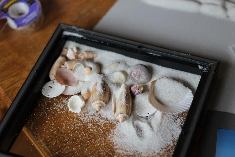seashell 3