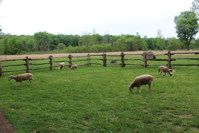 living farm 7