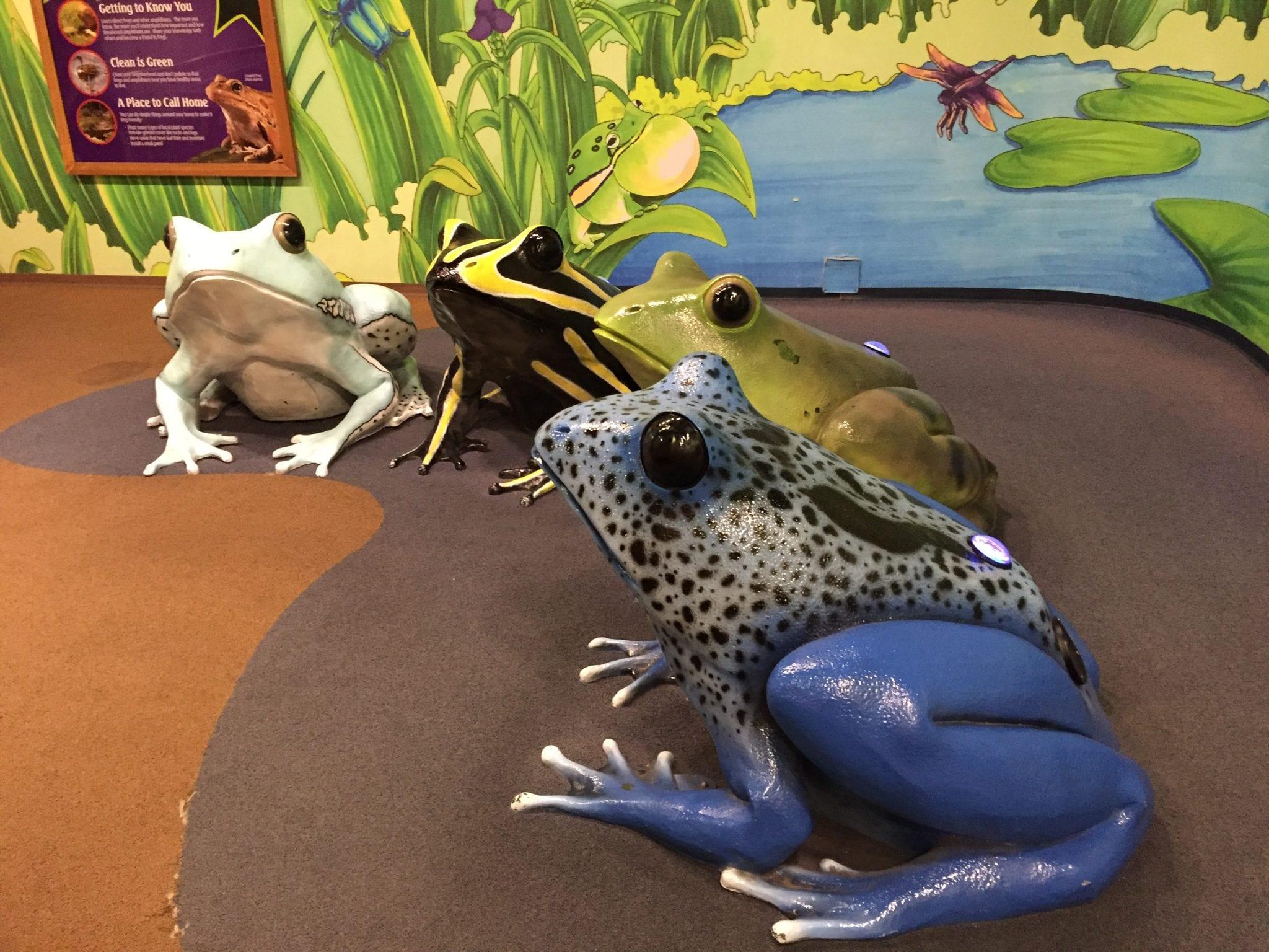 Frog Bog - Newport Aquarium, Newport, Kentucky