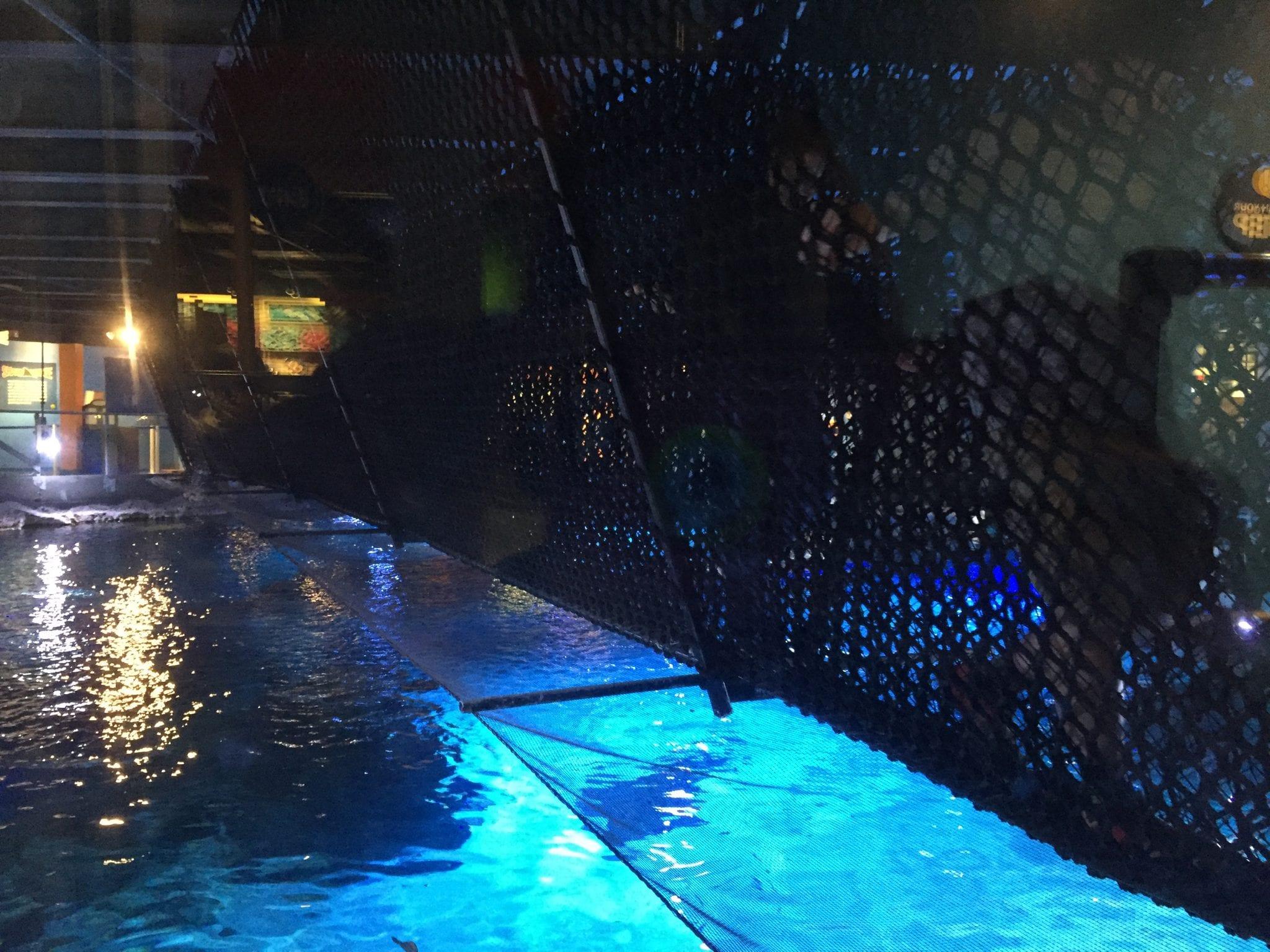 Shark Bridge - Newport Aquarium, Newport, Kentucky