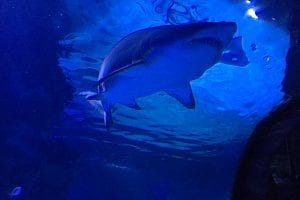 Things to know about the Newport Aquarium