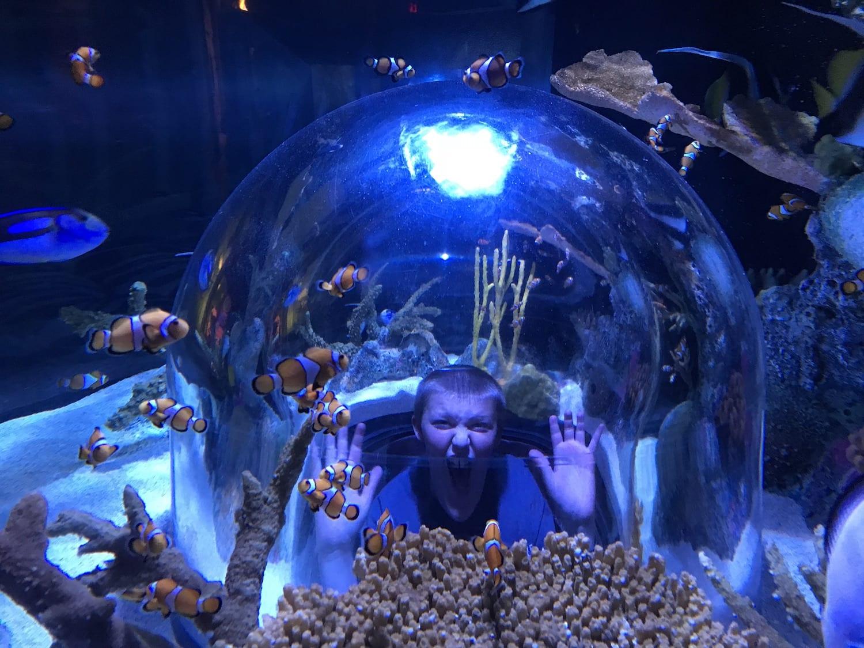 SEALIFE Aquarium at Mall of America