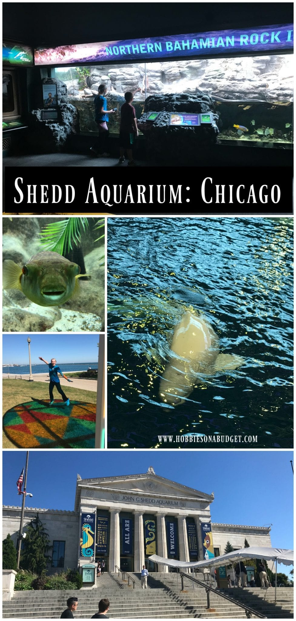 Shedd Aquarium Chicago - Book Tickets & Tours | skillfulnep.tkest prices· Fast & Easy booking· No hassle booking· Easy online booking.
