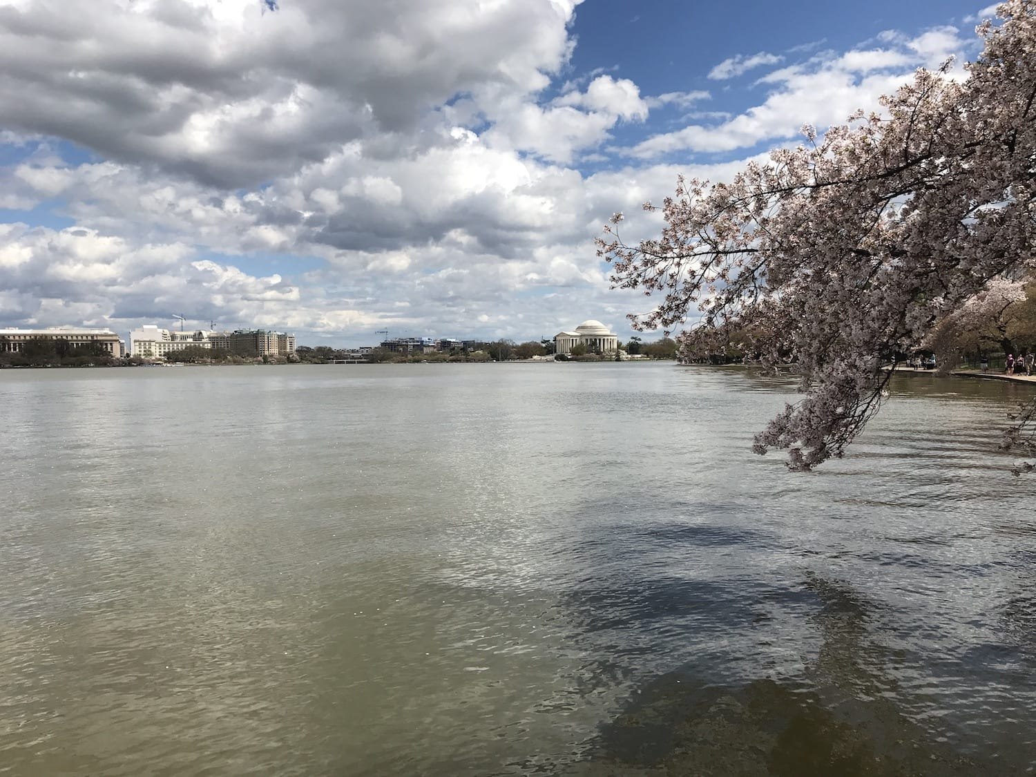Jefferson Memorial from the shore of the Tidal Basin