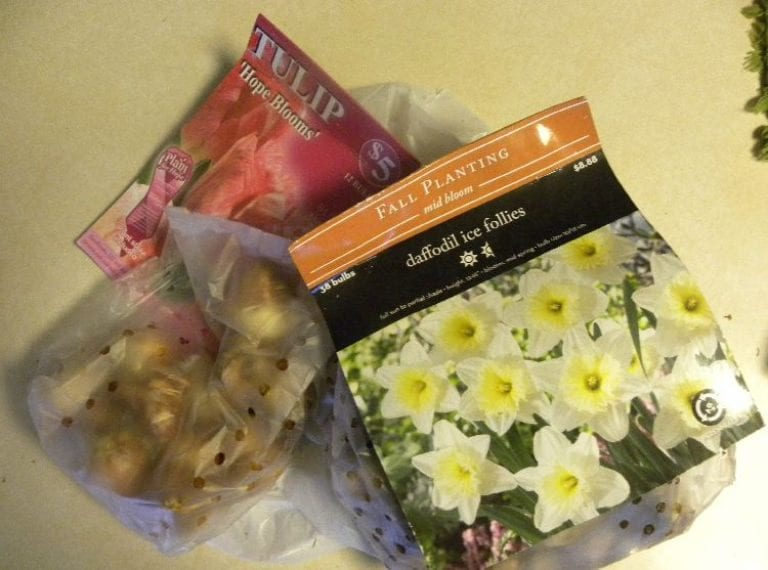 Dreaming of Daffodils