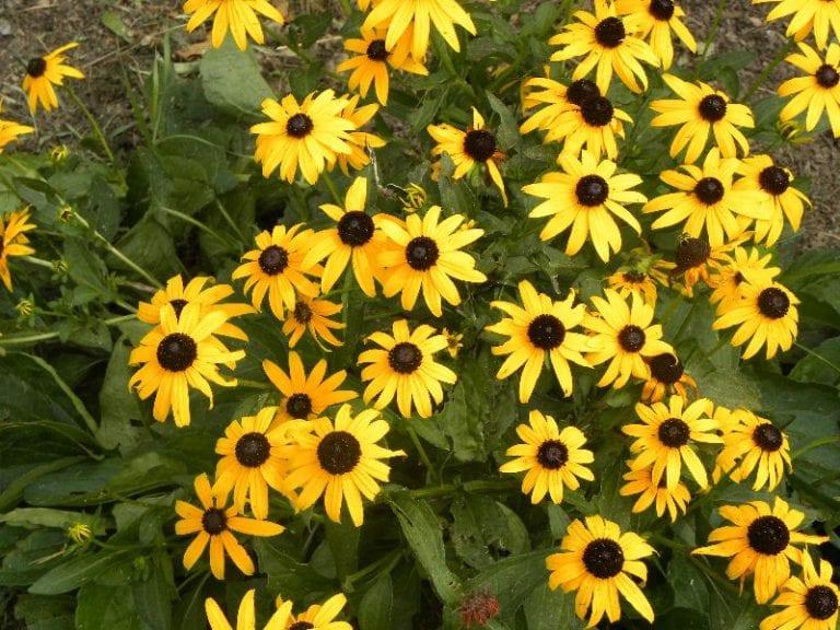 Flower Journal 2012
