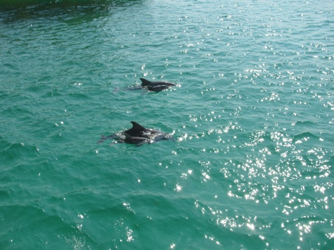 Southern Star Dolphin Cruise