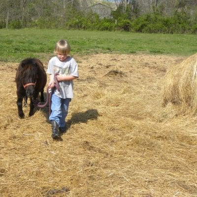 3 Basic Tips for Horse Care