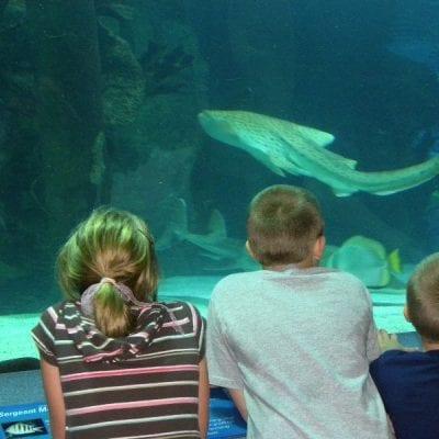 Newport Aquarium – More than Fish