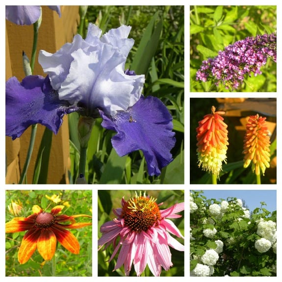 Journey as a Flower Gardener