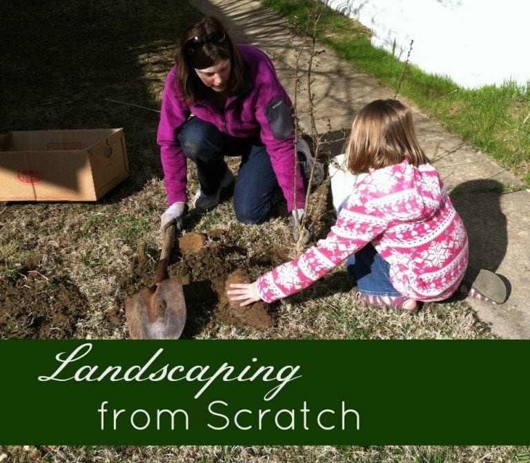 Landscaping from Scratch