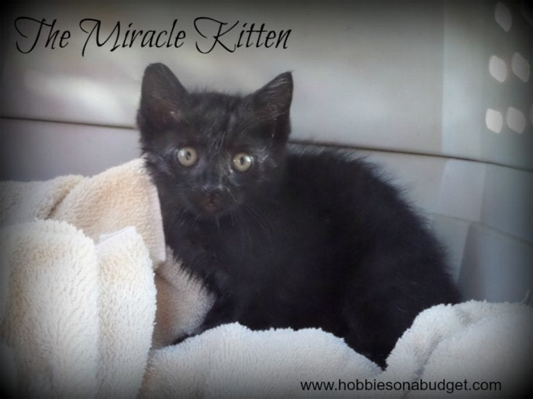 The Story of the Miracle Kitten