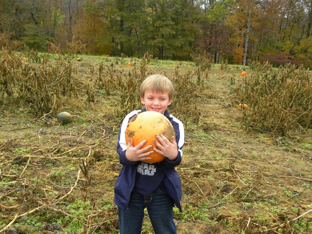 Pumpkin Patch/Corn Maze