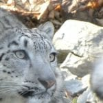 5 Ways to Save Money at the Zoo
