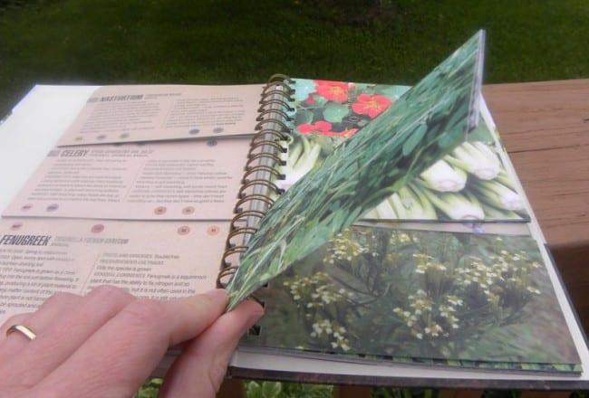 companion-planting
