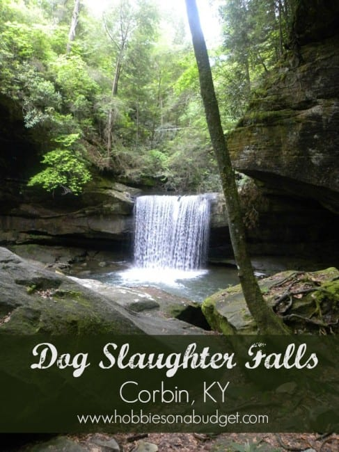 dog-slaughter-falls