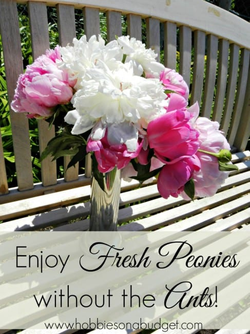 fresh-peonies