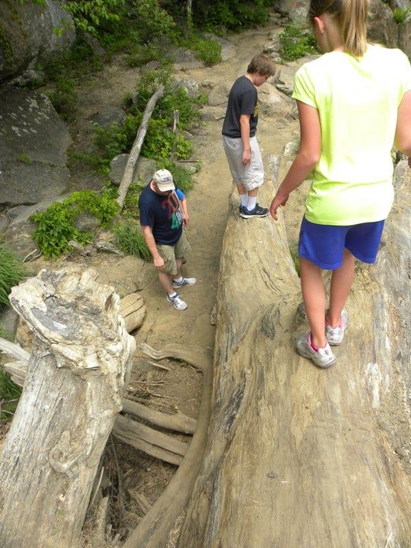 tree trunk climb