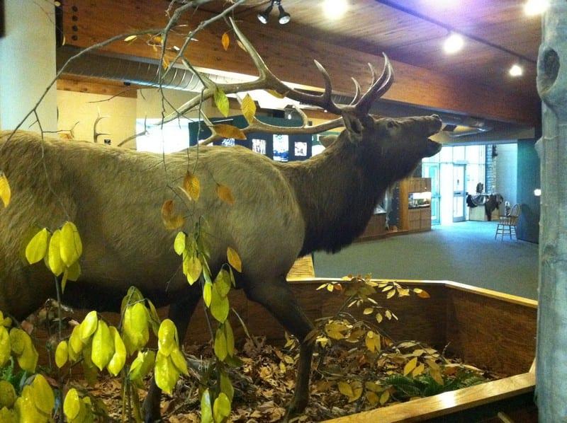 salato wildlife education center