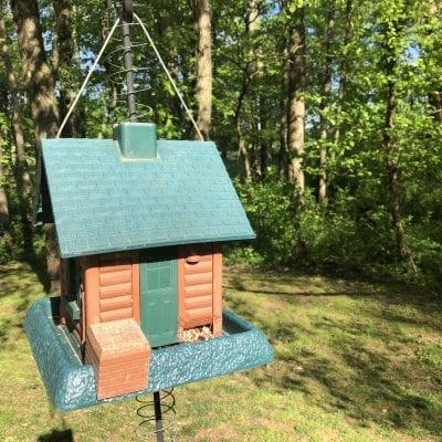 10 Easy Ideas to Feed Birds