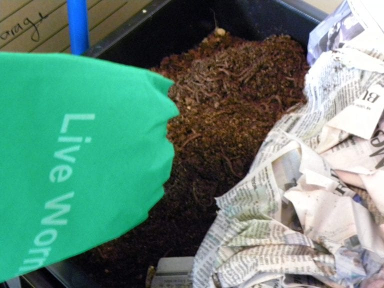 Feeding Worms:  Creating Compost