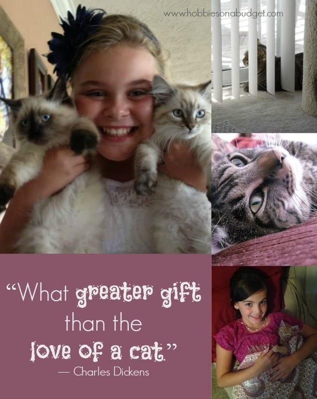love-of-cat