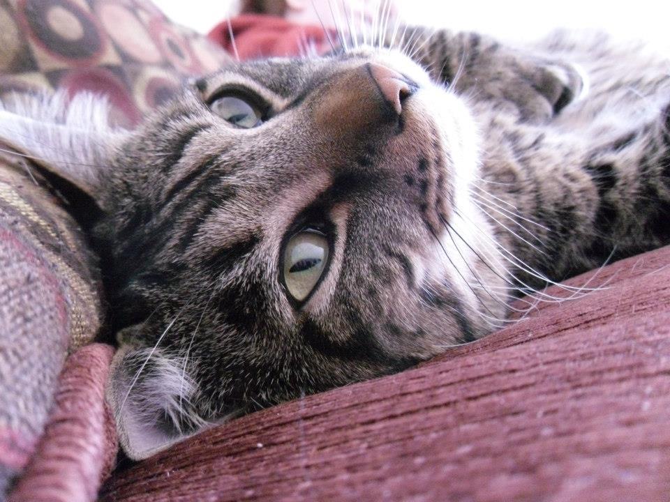 SHARON - turbo the cat