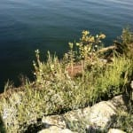 What Will You See at Green River Lake?