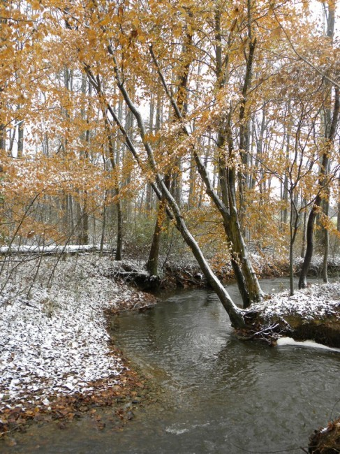creek 3_tn