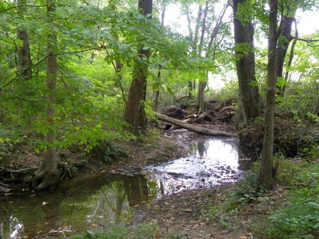summer creek 2_tn