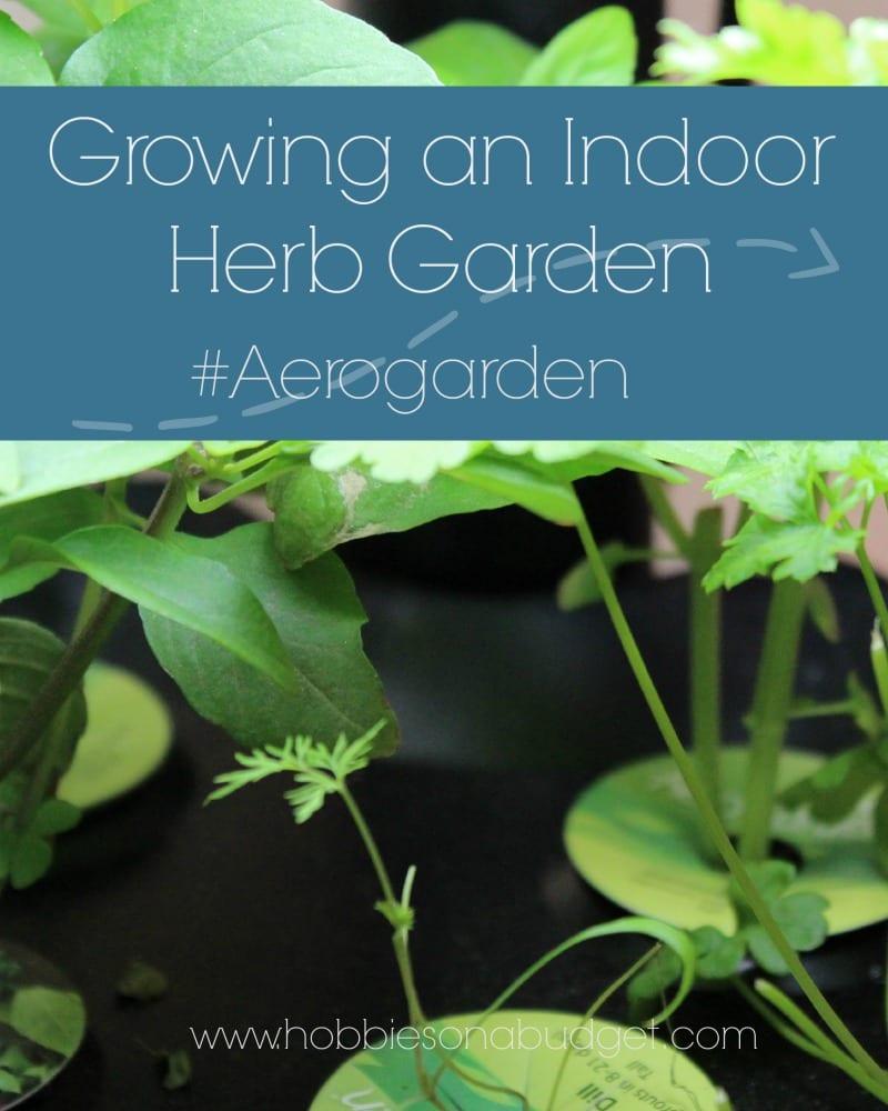 Growing an Indoor Herb Garden - Hobbies on a Budget