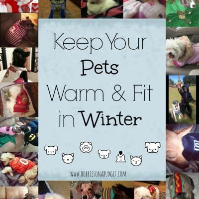 Keep Your Pets Warm & Healthy in Winter