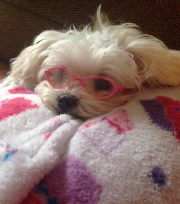 nala in glasses