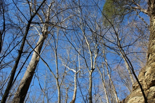 trees_tn