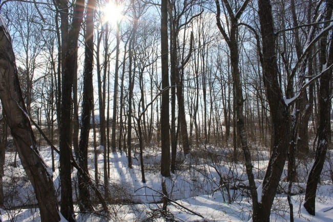 snow day_00052